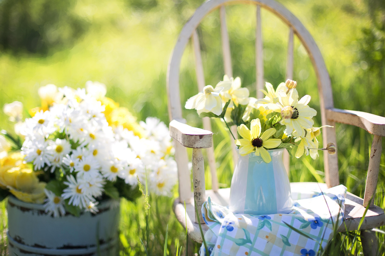 summer-still-life-daisies-yellow.jpg